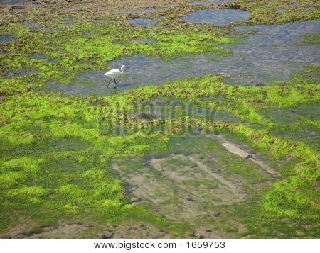 Grasses And White Bird