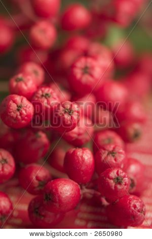 Red Wild Elderberry Clusters