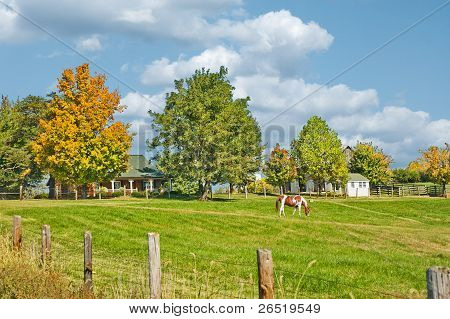Horse Farm In Kentucky Usa