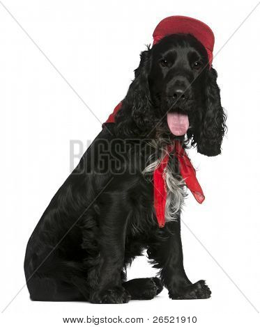 English Cocker Spaniel, 12 months old, wearing red hat in front of white background