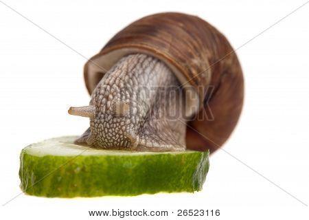 Dinner For A Snail