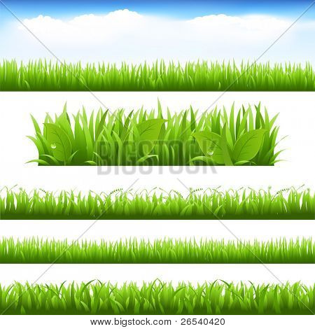 grüne Gras und Blätter Satz, isolated on white Background, Vector illustration
