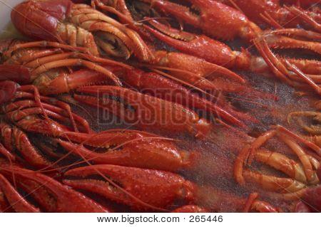 Frozen Lobsters
