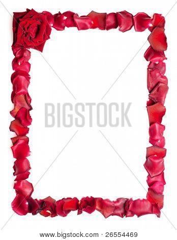 A border of red rose petals