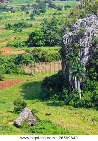 The Vinales valley in Cuba, a famous tourist destination and a major tobacco growing area