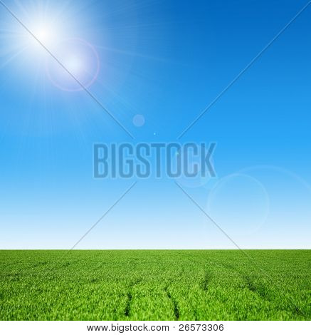 Winter wheat on a spring field