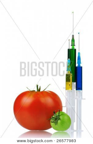 Genetically modified organism - ripe tomato with syringes on white background