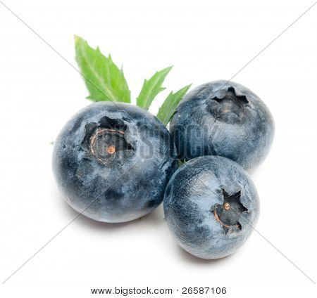 isolated blueberry