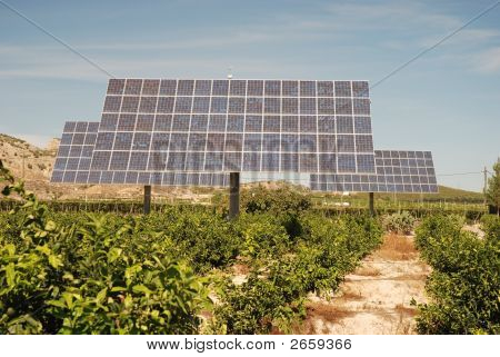 Solar Panels On An Orange Plantation In Spain