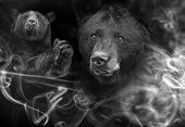 American Black Bear (ursus Americanus) The Black And White Portrait poster