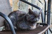 Bad And Sad Depressive Homeless Grey Cat poster