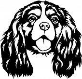Animal Dog Cavalier King Charles Spaniel 1 Tg6Y.eps poster