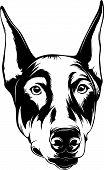 Animal Dog Doberman 5R3D.eps poster