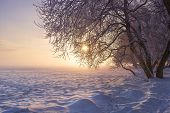 Winter Landscape At Sunset. Christmas Nature Background. Colorful Winter With Sun. Frosty Trees. Bea poster