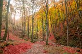 Autumn In Cozia, Carpathian Mountains, Romania. Colorful Autumn Leave. Vivid Fall Colors In Forest.  poster