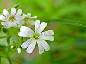 image of white flower  - white flowers  - JPG