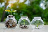 Coin Tree Glass Jar Plant Growing From Coins Outside The Glass Jar On Blurred Green Natural Backgrou poster