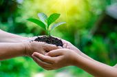 Adults Baby Hand Tree Environment Earth Day In The Hands Of Trees Growing Seedlings. Bokeh Green Bac poster