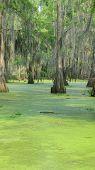stock photo of bayou  - Black Bayou Lake - JPG