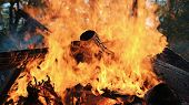 Bonfire Burns In The Forest In Autumn, Burning Logs And Leaves Close Up, Slow Motion poster