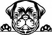 Animal Dog Pug Vex5Td Peeking.eps poster