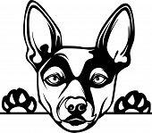Animal Dog Rat Terrier 2B Rg6H Peeking.eps poster