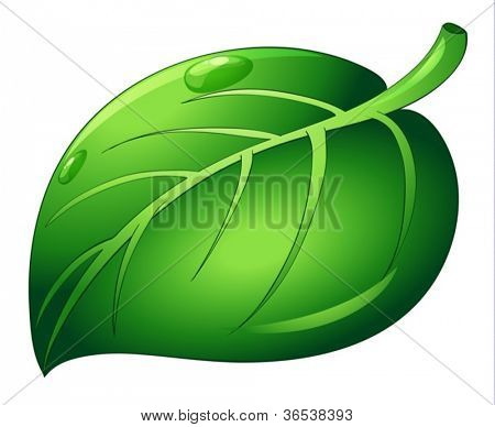 illustration of leaf on white background