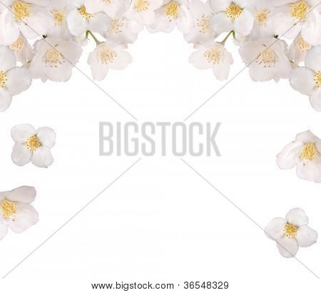 jasmin flowers half framer isolated on white background