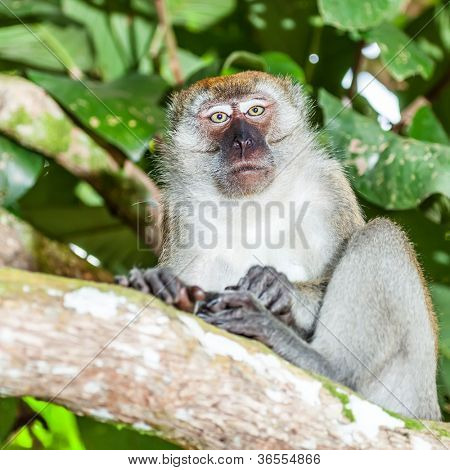 Portrait of the funny macaque