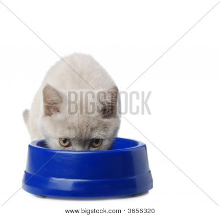 The Cat Eats From A Bowl
