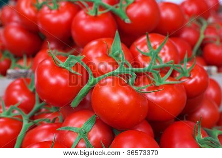 Pile of Bright red tomatoes with green vines at the farmers market