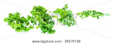 Cut Green Parsley Bush Isolated On White Background