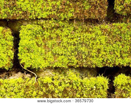 Brick Wall Full With Green Moss
