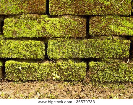 Brick Wall Full With Moss And Ground