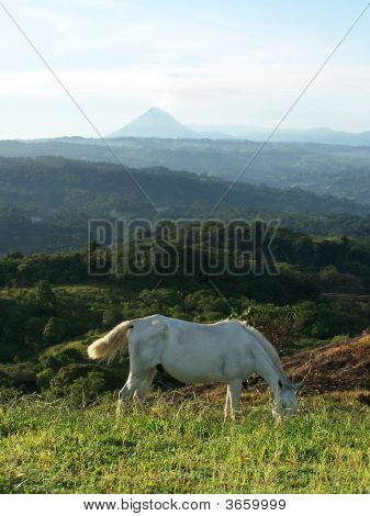 Wld Horse On Mountain In Costa Rica