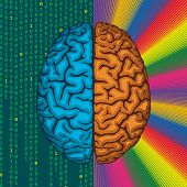 stock photo of left brain  - Differences between right and left cerebral hemispheres - JPG