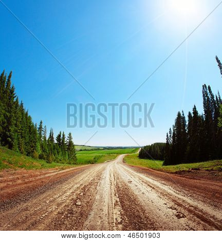 Rural road with pine trees on sides in a sunny clear day