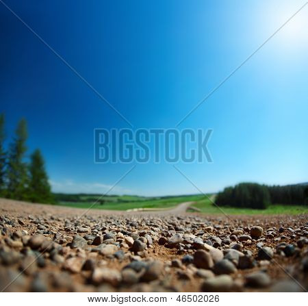 Rural road with pine trees on sides in a sunny clear day. Shallow DOF