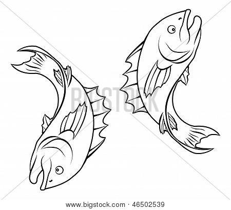 Stylised Fish Illustration