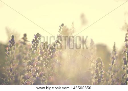 Wild flowers in a decline in the field