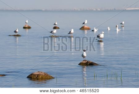 Gulls On The Rocks