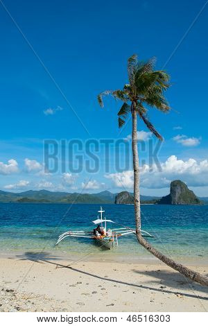 Tropical Landscape With Curved Palm Tree