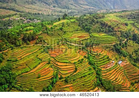 Aerial View Of Colorful Rice Field Terraces
