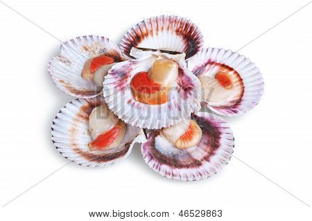 Half A Dozen Fresh Opened Scallop