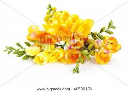bunch of lovely freesia on white background - flowers and plants
