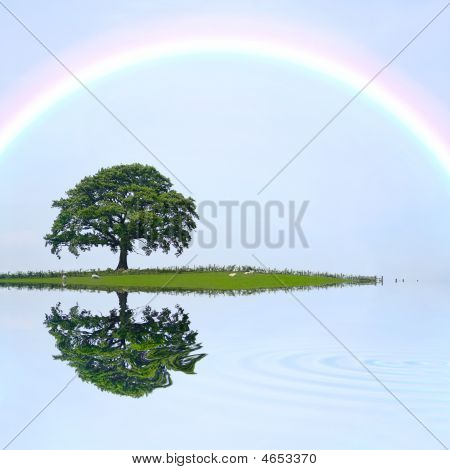 Oak Tree And Rainbow