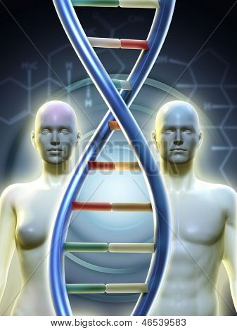 Male and female human figures linked by a dna chain. Digital illustration.