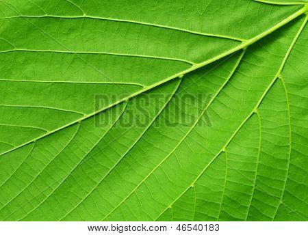 textura da folha.