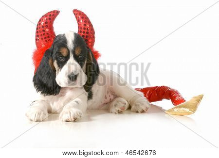 naughty puppy - english cocker spaniel puppy dressed up like a devil