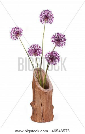 Flowers purple decorative onion Allium in wooden vase